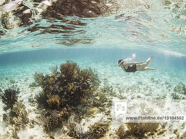 Woman snorkeling underwater  Grand Cayman  Cayman Islands Woman snorkeling underwater, Grand Cayman, Cayman Islands