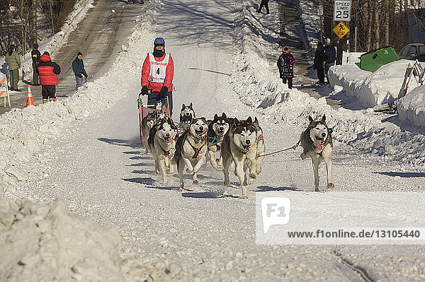 Musher And Dog Team Mush In The Anchorage Fur Rendezvous Sled Dog Races  2007