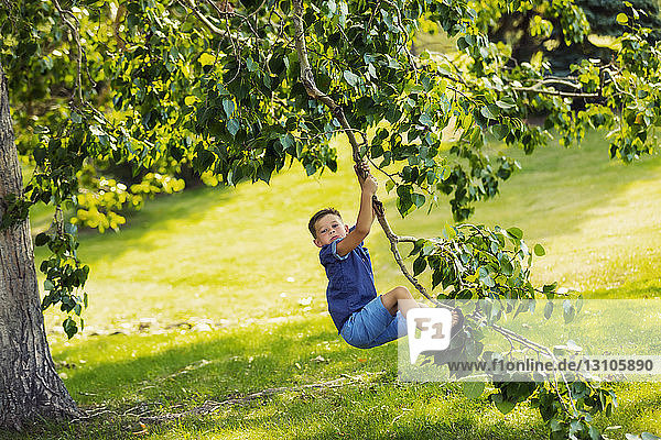 A young boy swinging fearlessly from a tree branch in park during a family outing on a warm fall day; Edmonton  Alberta  Canada