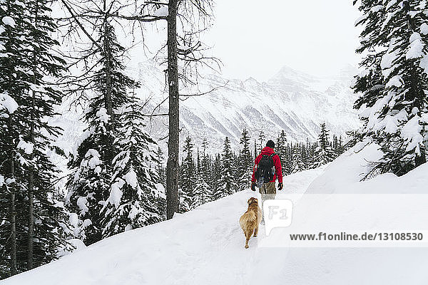 Rear view of hiker with Golden Retriever walking snow covered field at forest