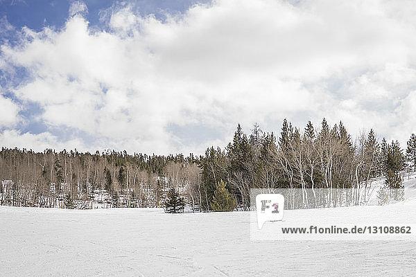 Vater mit Tochter beim Skifahren auf schneebedeckter Landschaft vor bewölktem Himmel im Wald