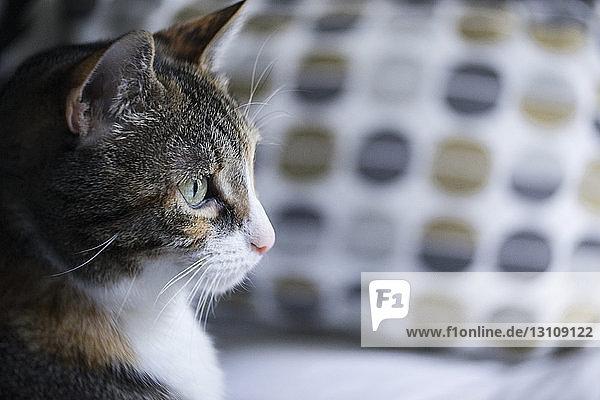 Seitenansicht einer Katze  die beim Sitzen auf dem Sofa wegschaut