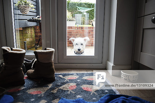 Portrait of dog seen through door window