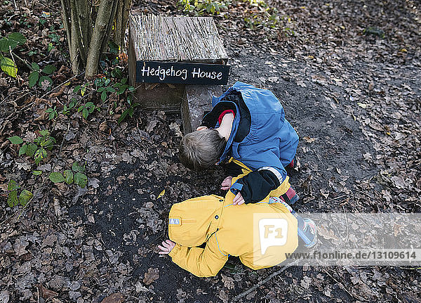 High angle view of siblings looking into hedgehog house in forest