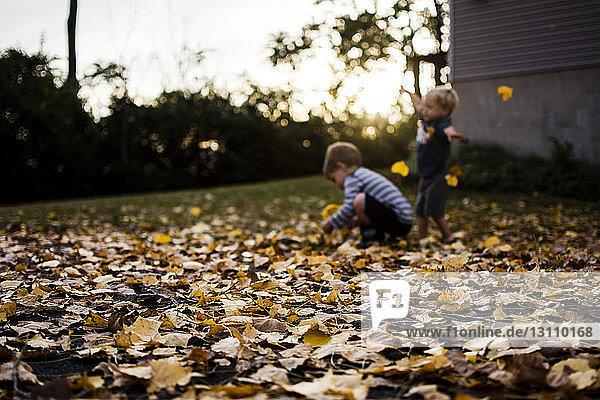 Glückliche Brüder spielen im Herbst im Garten mit Ahornblättern