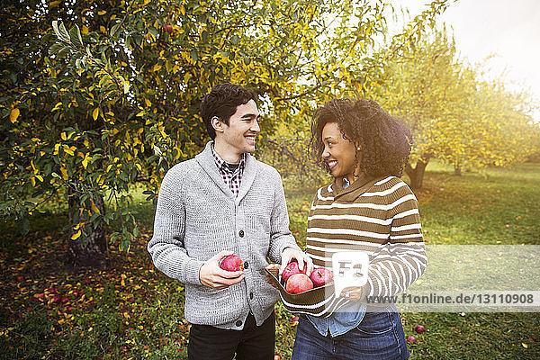 Paar mit Äpfeln,  die sich gegenseitig im Obstgarten anschauen