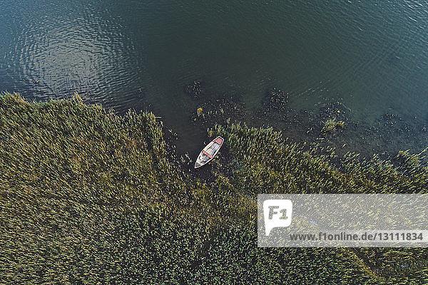 Hochwinkelansicht eines am Seeufer im Wald vertäuten Bootes