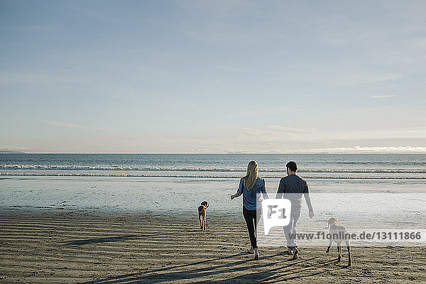 Rear view of couple holding hands while walking with dogs toward sea against sky at beach