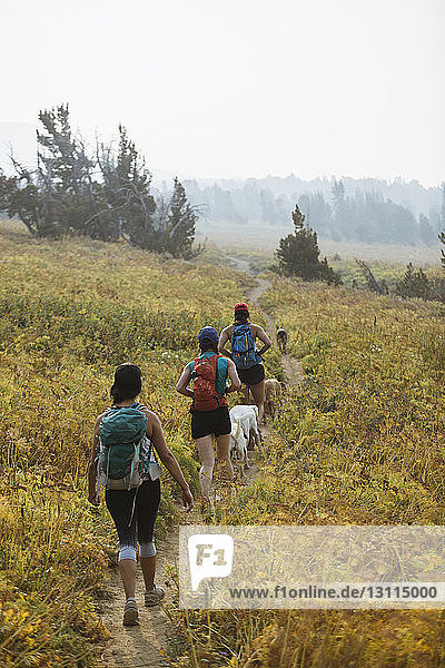 Rear view of friends with dogs walking on field against clear sky in forest