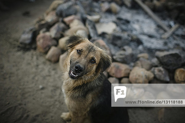 Hochwinkelporträt eines am Boden sitzenden Hundes Hochwinkelporträt eines am Boden sitzenden Hundes