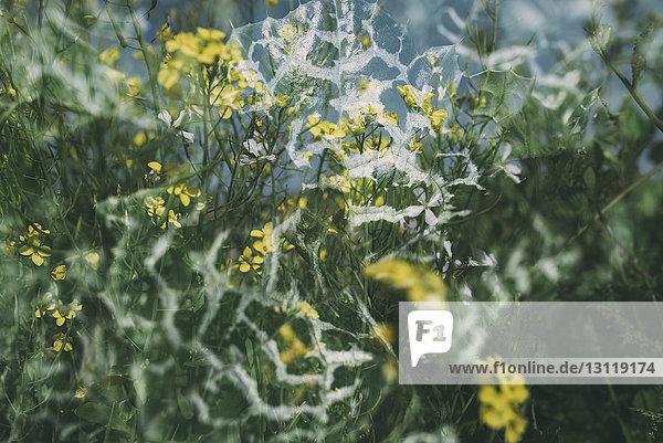 Blühende Pflanzen durch gefrorenes Fenster gesehen