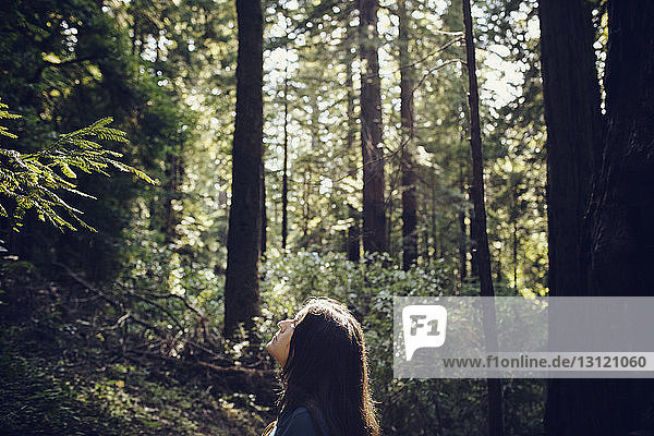 Woman looking up while standing in forest on sunny day
