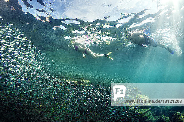 Couple snorkeling by fishes under sea
