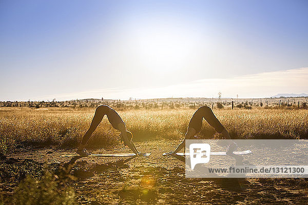 Female friends practicing downward facing dog position yoga on field