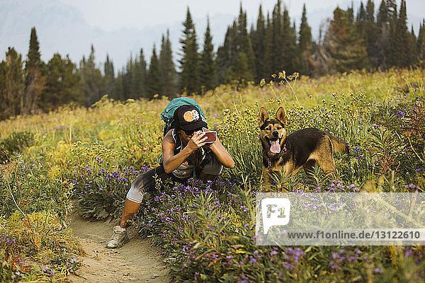 Frau fotografiert Hund mit Mobiltelefon  während sie auf dem Feld im Wald kauert