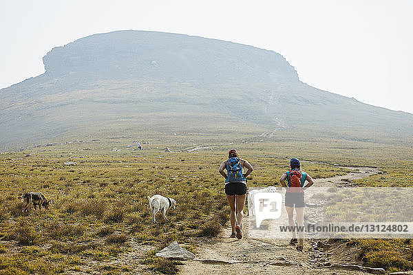 Rear view of female hikers with dogs walking on field against mountain