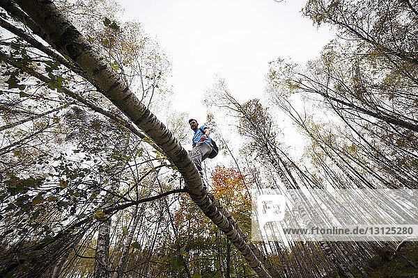 Low angle view of male backpacker walking on tree branch against sky