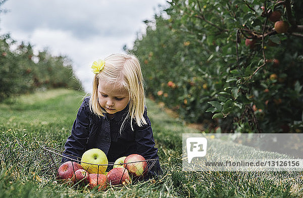 Girl with apples in basket sitting on grassy field at orchard