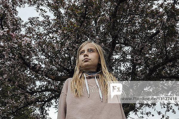 Niedrigwinkelansicht eines Mädchens  das weg schaut  während es am Baum steht