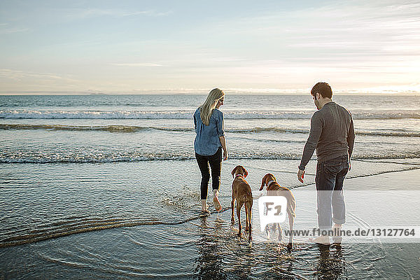 Rear view of couple with dogs on shore against sky during sunset