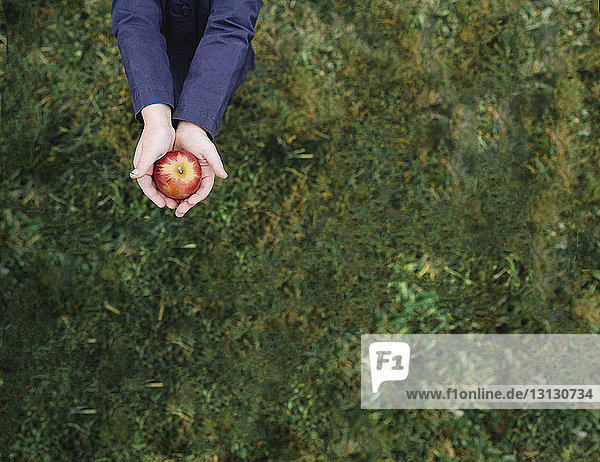 Midsection of girl holding apple while standing on grassy field at orchard