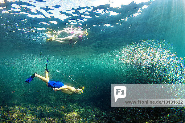 Couple snorkeling by school of fish under sea