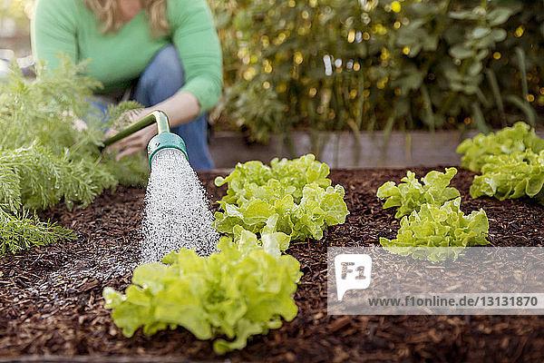 woman watering vegetable plants on farm