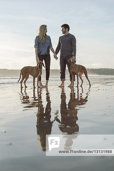 Niedrigwinkelansicht eines Paares  das sich an den Händen hält  während es mit Hunden am Ufer am Strand steht