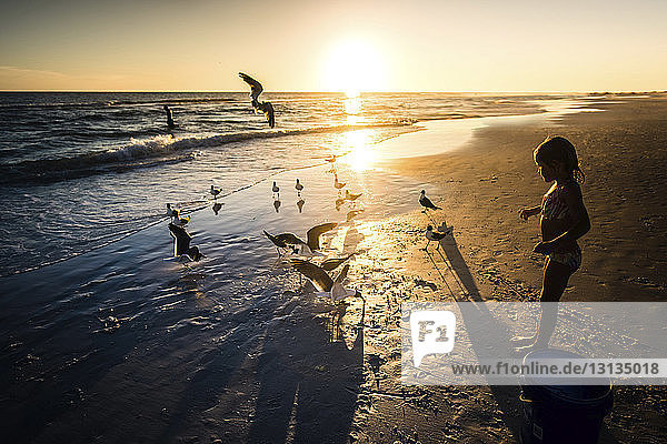 High angle view of girl looking at birds on beach during sunset