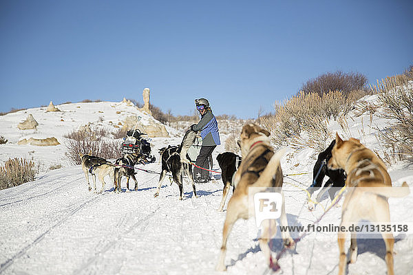Side view of cheerful woman looking dogsledding