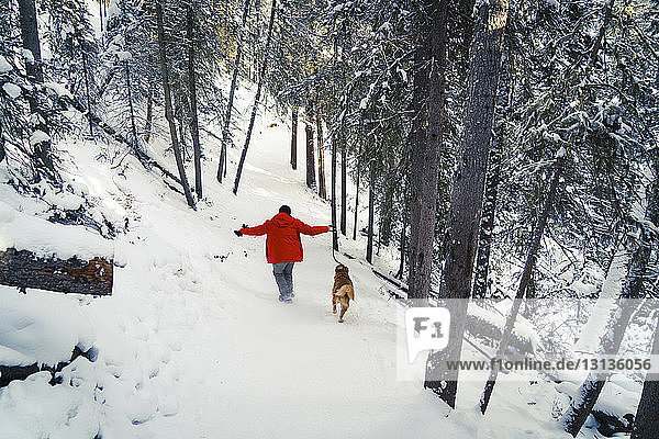 Rear view of man with Golden Retriever walking on snow covered field in forest