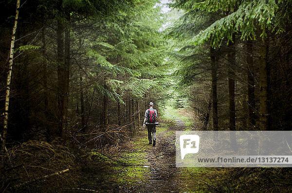 Rückansicht eines männlichen Wanderers  der im Wald wandert