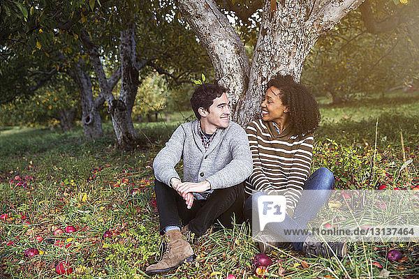 Liebespaar sieht sich an  während es im Obstgarten an einem Baum sitzt