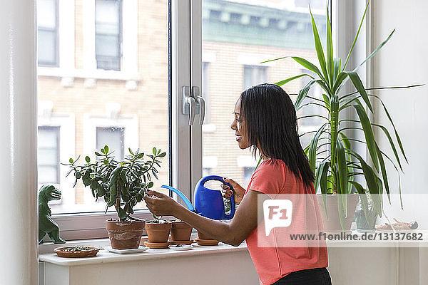 Frau giesst zu Hause Topfpflanzen auf der Fensterbank