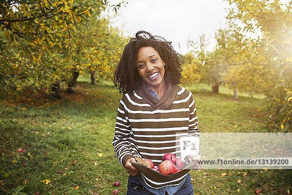 Porträt einer Frau  die im Obstgarten stehend Äpfel trägt