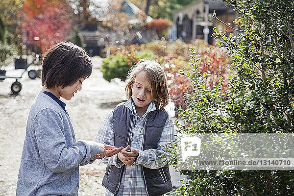 Friends examining plants during field trip