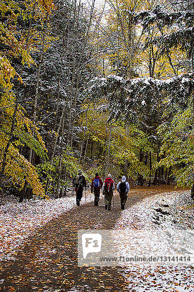 Rückansicht von Wanderern  die auf einer Straße im Wald gehen
