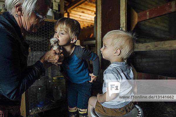 Seitenansicht der Großmutter  die den Enkeln im Stall ein Küken zeigt