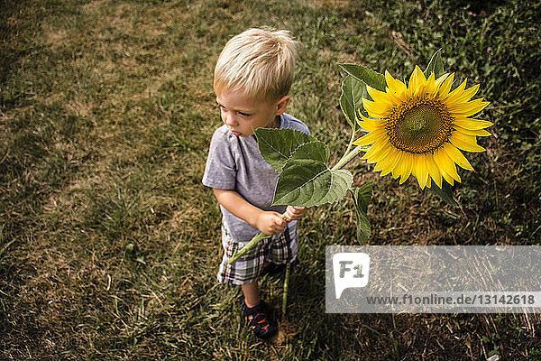 Hochwinkelaufnahme eines Jungen  der eine Sonnenblume hält  während er auf einem Feld im Hinterhof steht