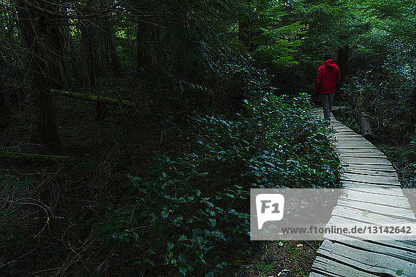 Rear view of hiker walking on boardwalk in forest