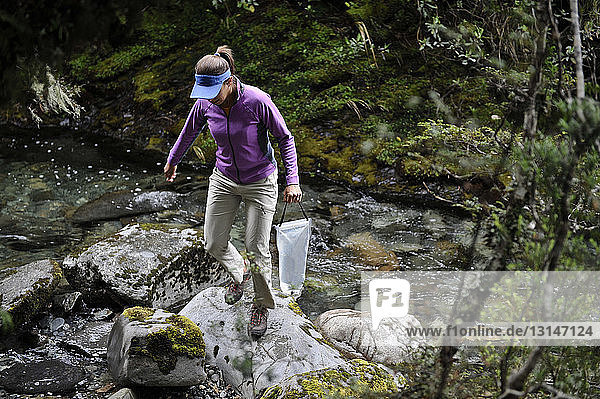 Mid adult woman taking water sample from stream  Kahurangi National Park  New Zealand