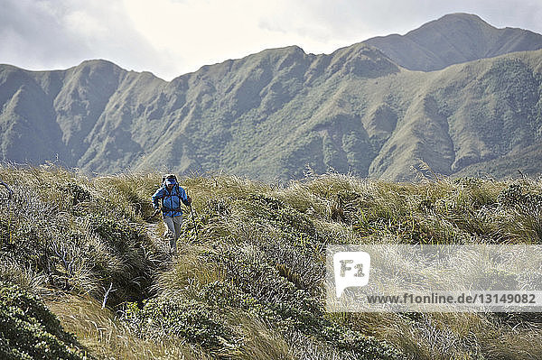 Female hiker hiking in mountains  Tararua Ridge  New Zealand