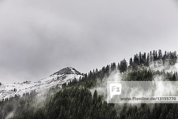 View of forest mist and snow capped mountains  Achenkirch  Austria
