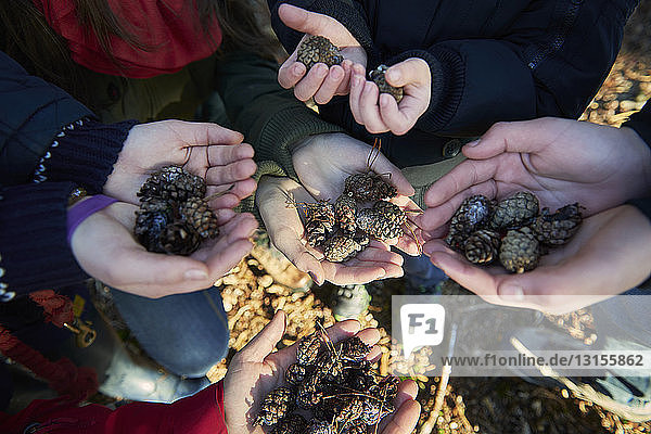 Family holding pine cones in hands  focus on hands  close-up