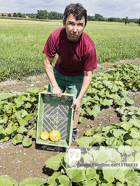Farmer with crate for pumpkins in organic farm