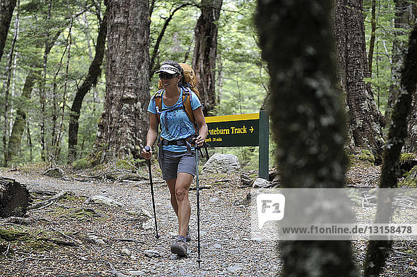 Mid adult woman hiking in forest  New Zealand