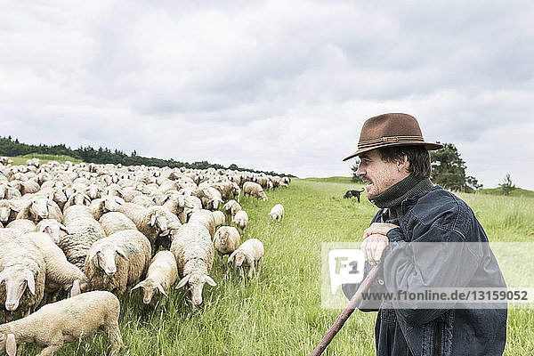 Farmer in field tending to sheep