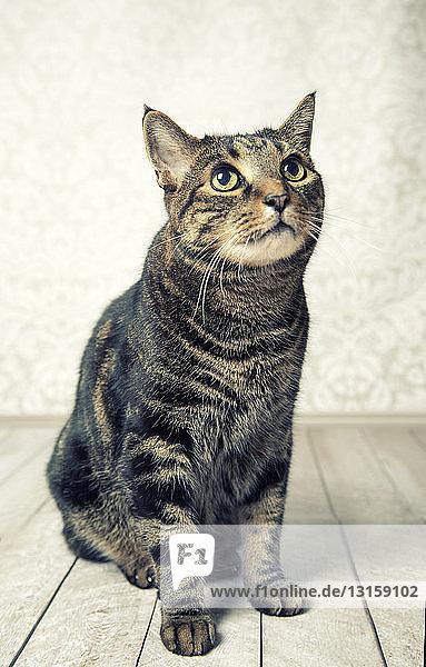 Cat looking obedient