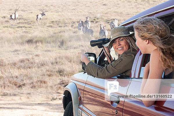 Women looking at zebras from vehicle  Stellenbosch  South Africa