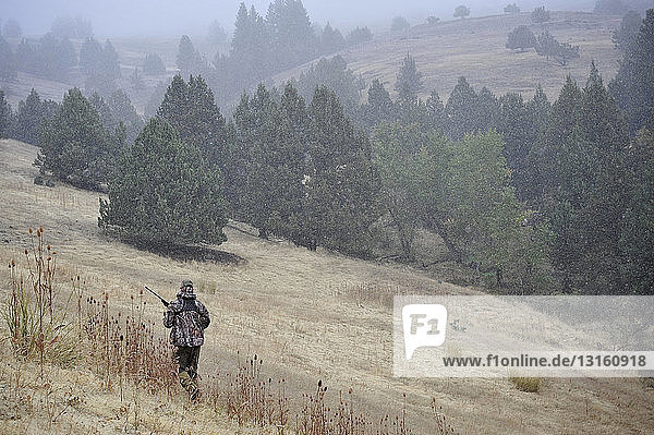 One deer hunter walking across field  John Day  Oregon  USA